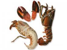 Split Raw Canadian Lobster
